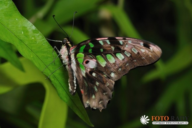 vystava-tropickych-motylu-2011-01